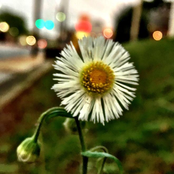 macro_flower2